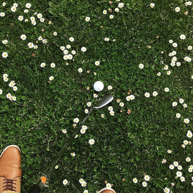 Golf club and ball in rough grass with daisies